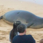 A monk seal visits